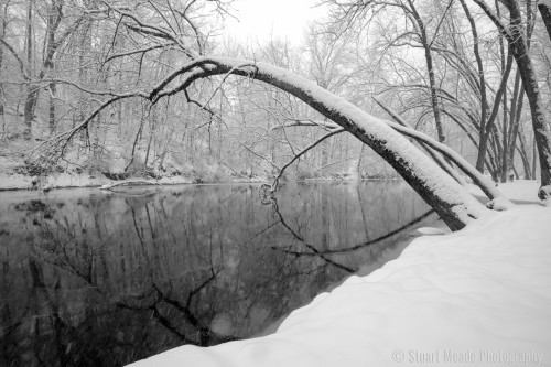 Snowy Tree over Elkhart River